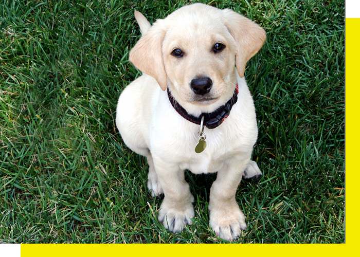 Image of a puppy sittin gin the grass